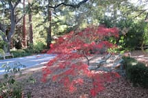 Fall in the garden -- our beautiful Japanese maple tree.