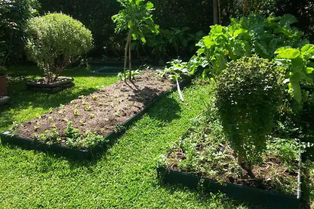 Horta orgânica