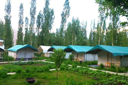 Dream camp sumoor - Tent