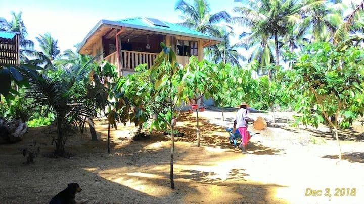 Dariano Cacao Farm Stay