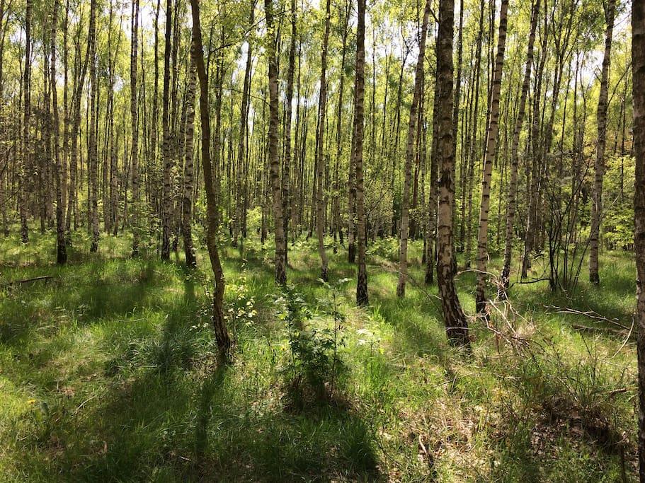 Der Wald direkt vor der Tür