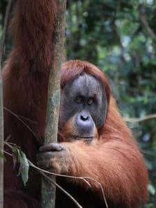 Wild Orangutan Preserve Clean, WIfi - Stabat - Casa