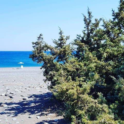 Cedrus and sea, Gennadi, beach front house