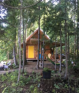 Forest Bunky