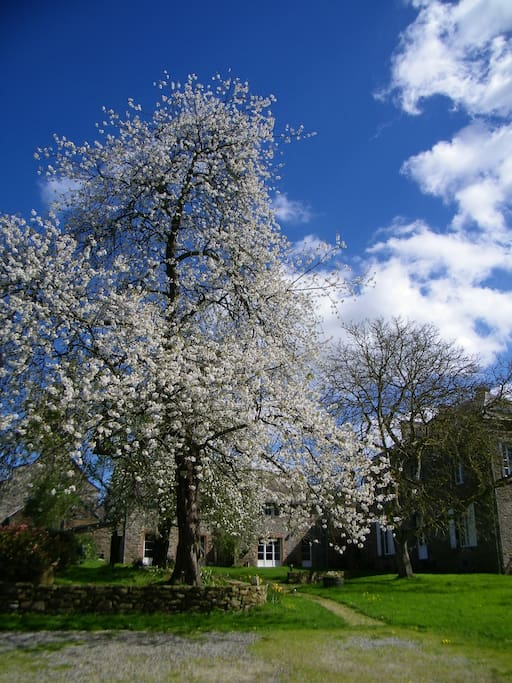 Spring at La Touche