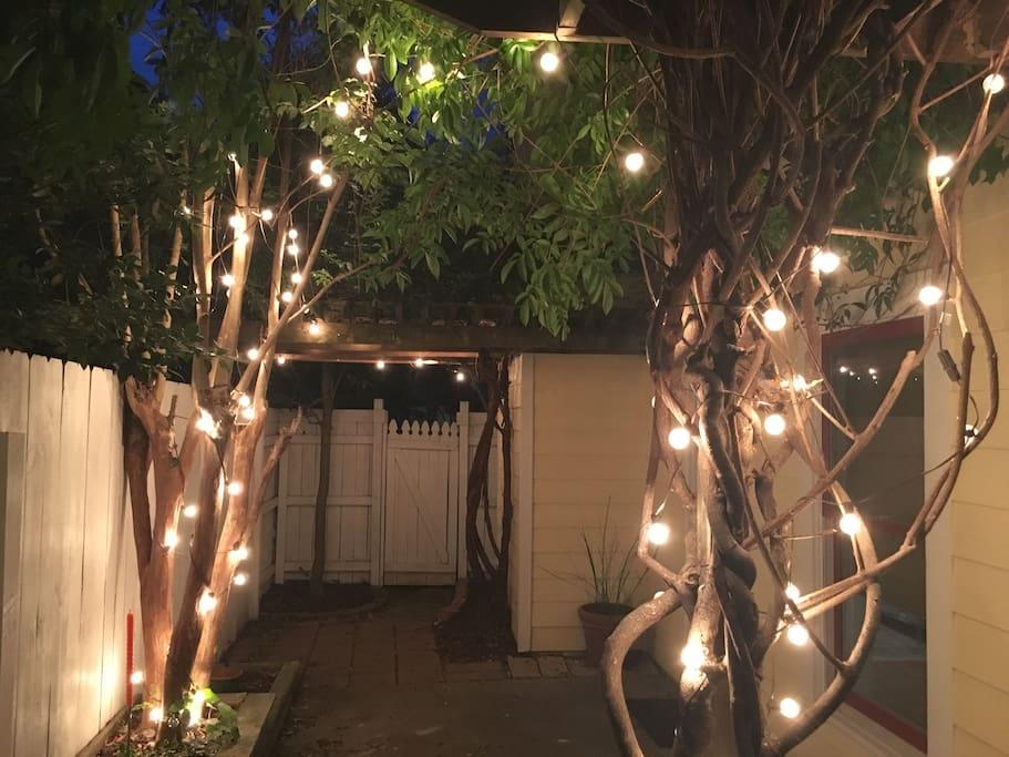 Back garden at night