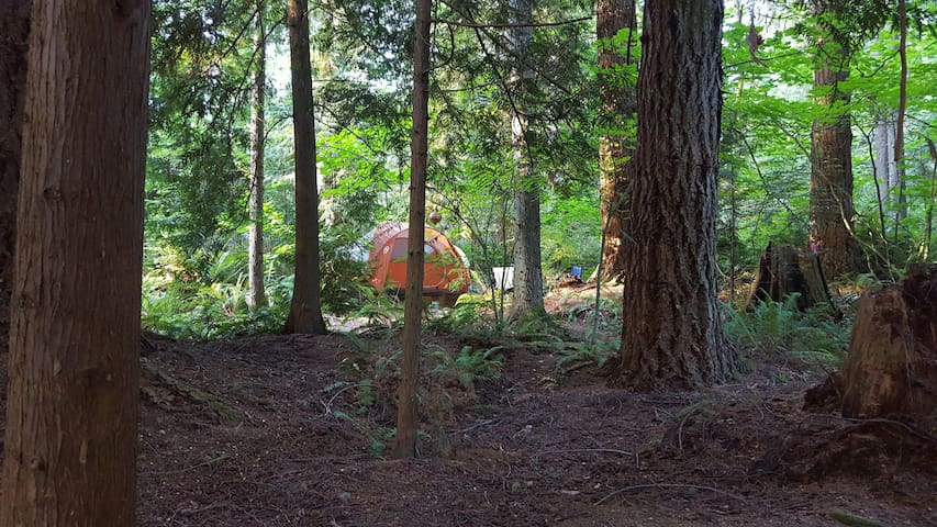 Large Campsite, fire pit Close to Seattle