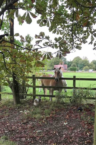 My neighbours!