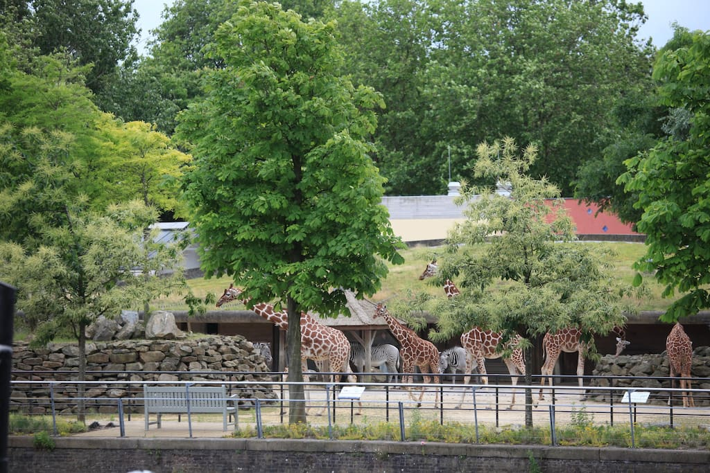 See zoo animals from the appartement!