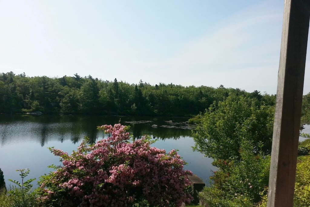 Great walking trails, peace and serenity...and oh so close to downtown Halifax.