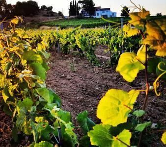 Descobreix el Penedès i els seus vins