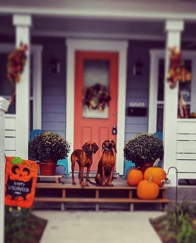 Daisy and Penny are all set for fall