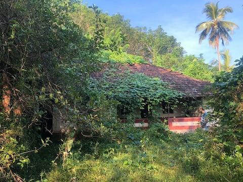 Adivasi starseed Earth Homes