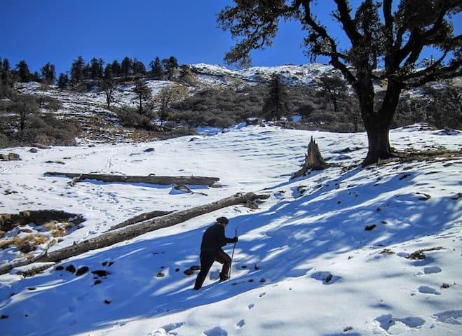 Chopta Camp Himalayas (Duggalbitta): MHETCLUB com