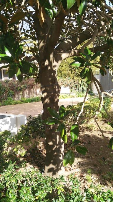 vista parcheggio interno con giardino