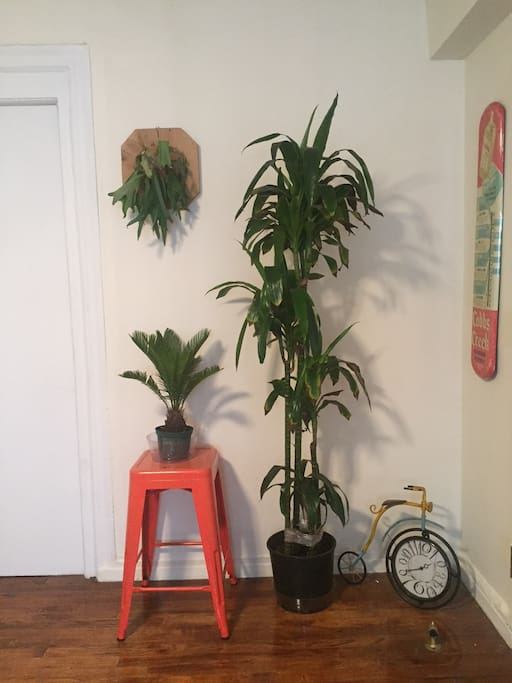 Our favorite corner of the apartment, a warm tropical theme in the concrete jungle