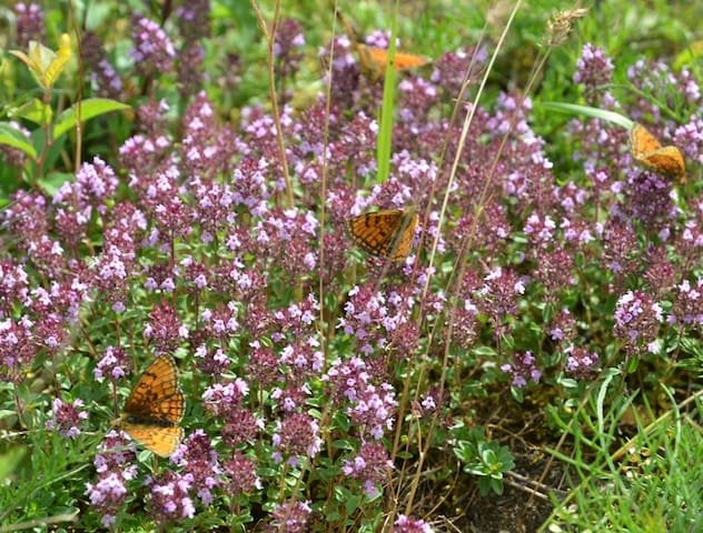 In spring and summer, the flowers and butterflies on the mountains are amazing.  There are many spectacular walks  you can do from the gite.