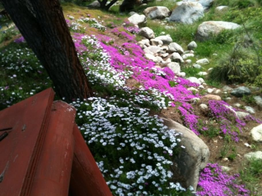 Beautiful ground cover on river bank