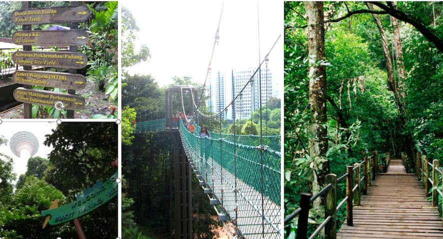 less than 5 mins walk to the reserved forest in the city for canopy walk