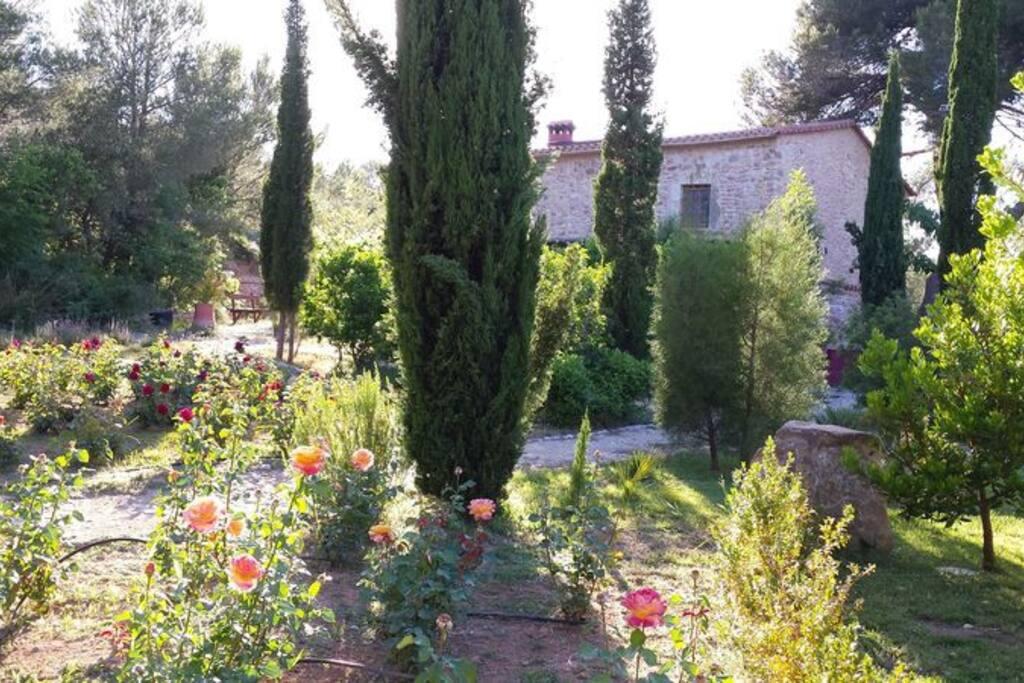 Vista desde el jardín de aromáticas.