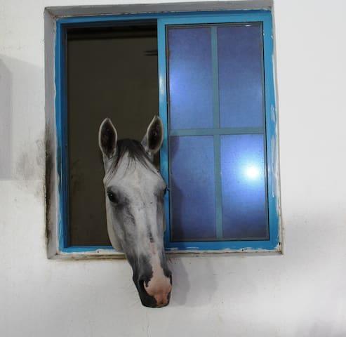 Creo Equestrian Club and Resort