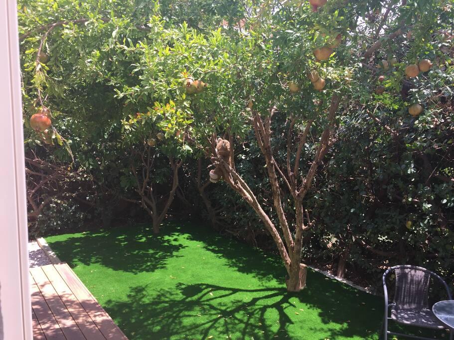 ...fruit trees