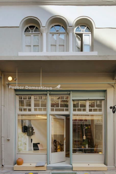 Passer Domesticus building