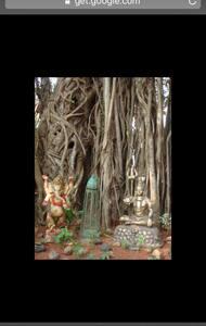 The Banyan Tree House@Keri - Panjim - Dom
