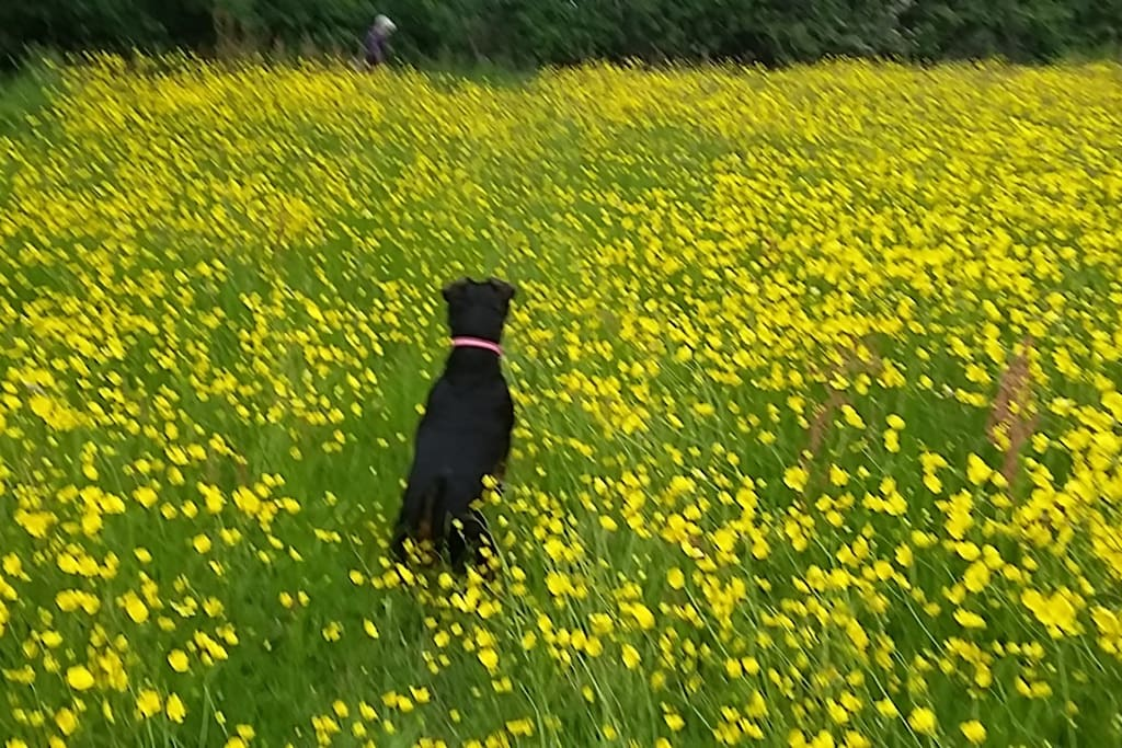 dogs welcome fields opposite my house