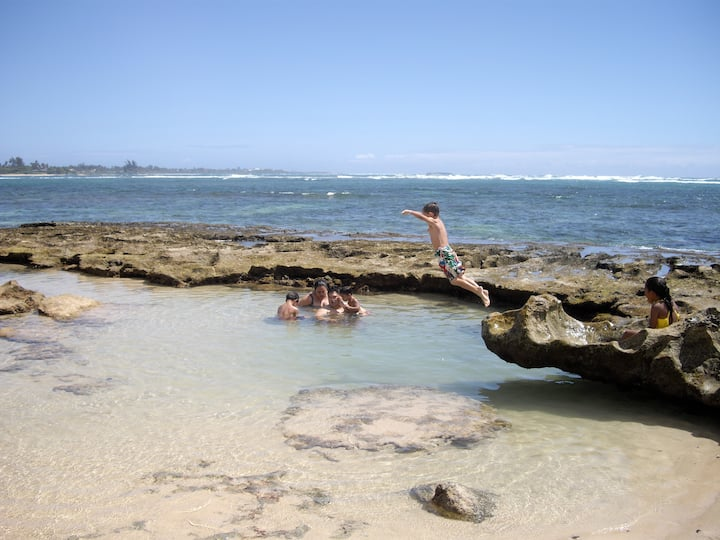 Tropical Treasure on a White Sandy Beach