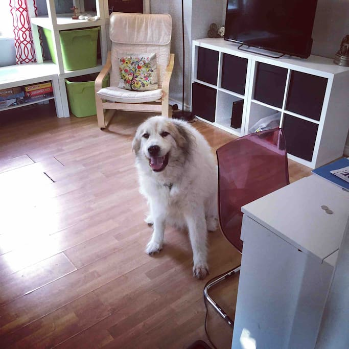Our large, loveable dog in the front room