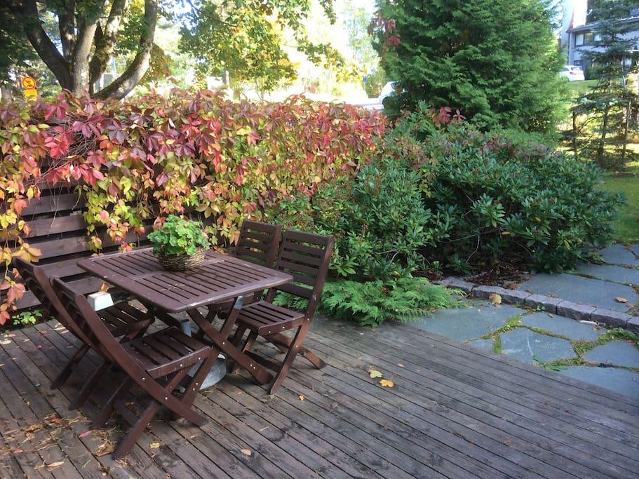 Backyard in fall colours