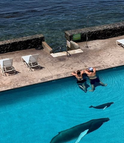 Discover Ocean Front Lahaina Town
