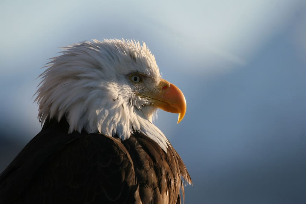 Eagles are often seen flying over the house from the bay to their nest.