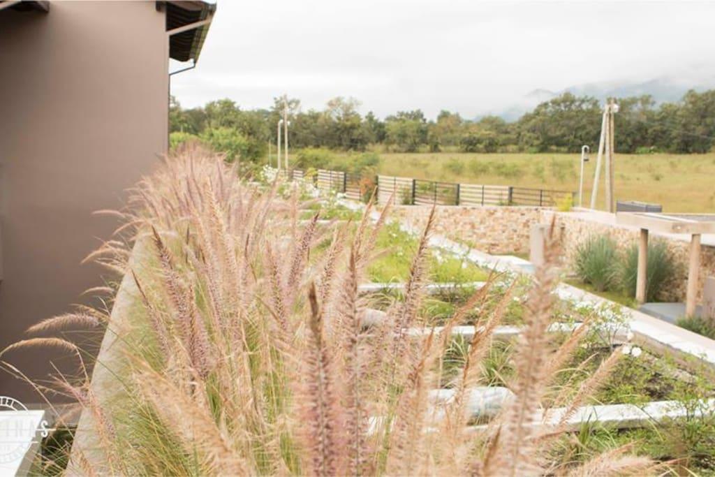 Nuestra terraza jardín apreciada desde las habitaciones.