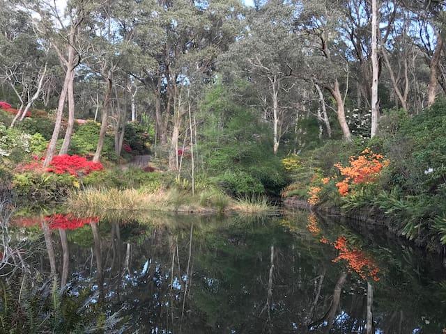 Rhodo gardens