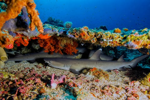 Stay and Dive with Murex Bangka Dive Resort