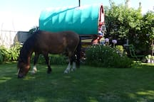 Lovely garden where you can relax. The pony is not a permanent resident.