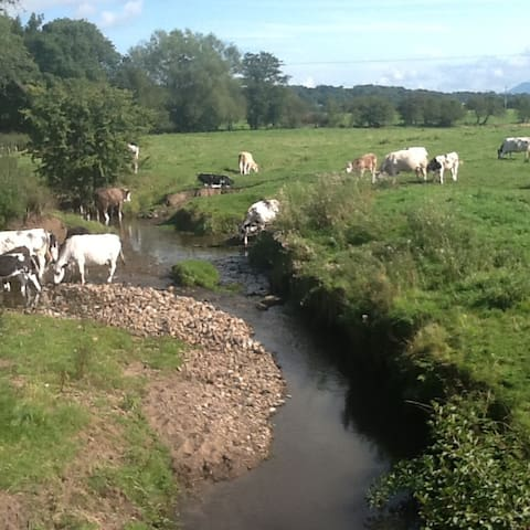 Beautiful Ribble Valley village forest of Bowland - Ribchester - Hus