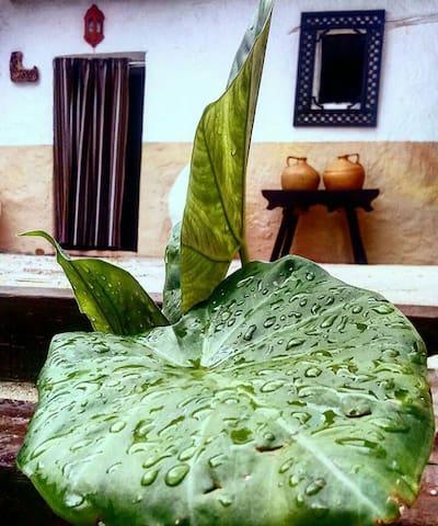 Alojamiento Rural Casa Mateo - Fuentes de Cesna - Hus