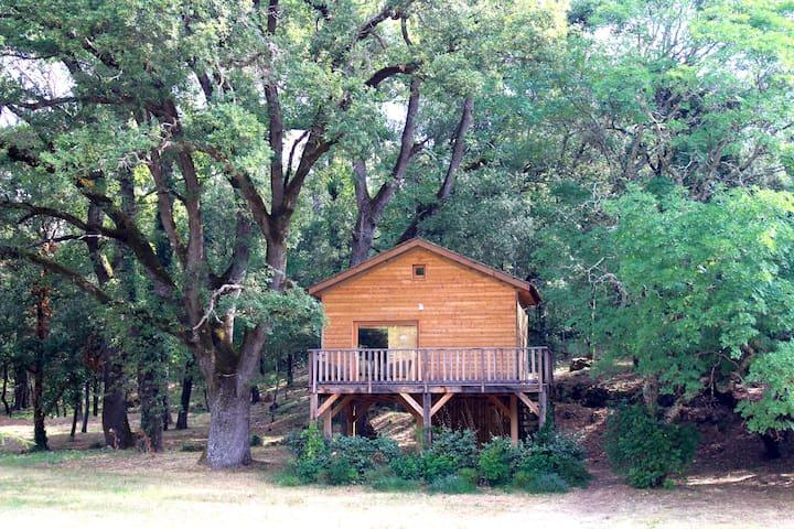 Une cabane dans les Arbres au cœur d'un Vignoble.