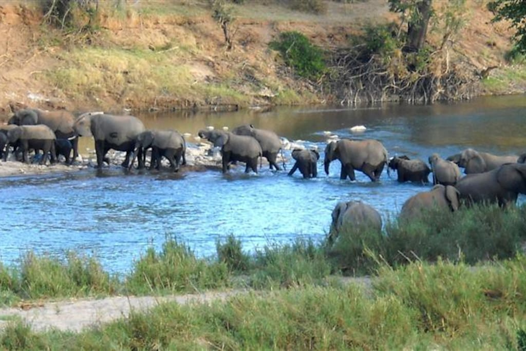 Elephant crossing the Olifants River