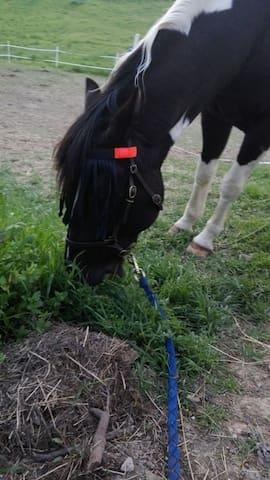 Piccolo paradiso dei cavalli.
