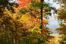 Beautiful fall colors for October and November days.