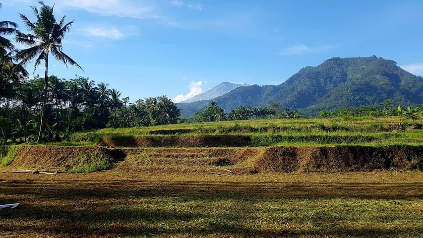 Heritage homestay, huge gardens, mountains, 1 pax