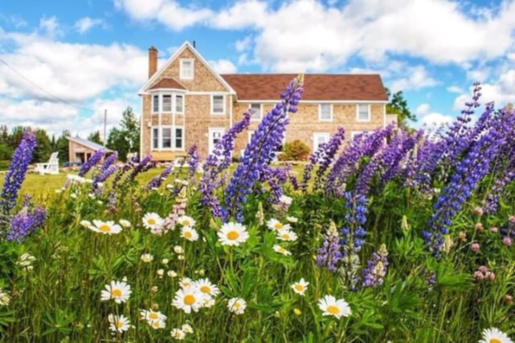 Early season wildflowers at Salty Rose's and the Periwinkle Cafe. photo credit: @thiswildair