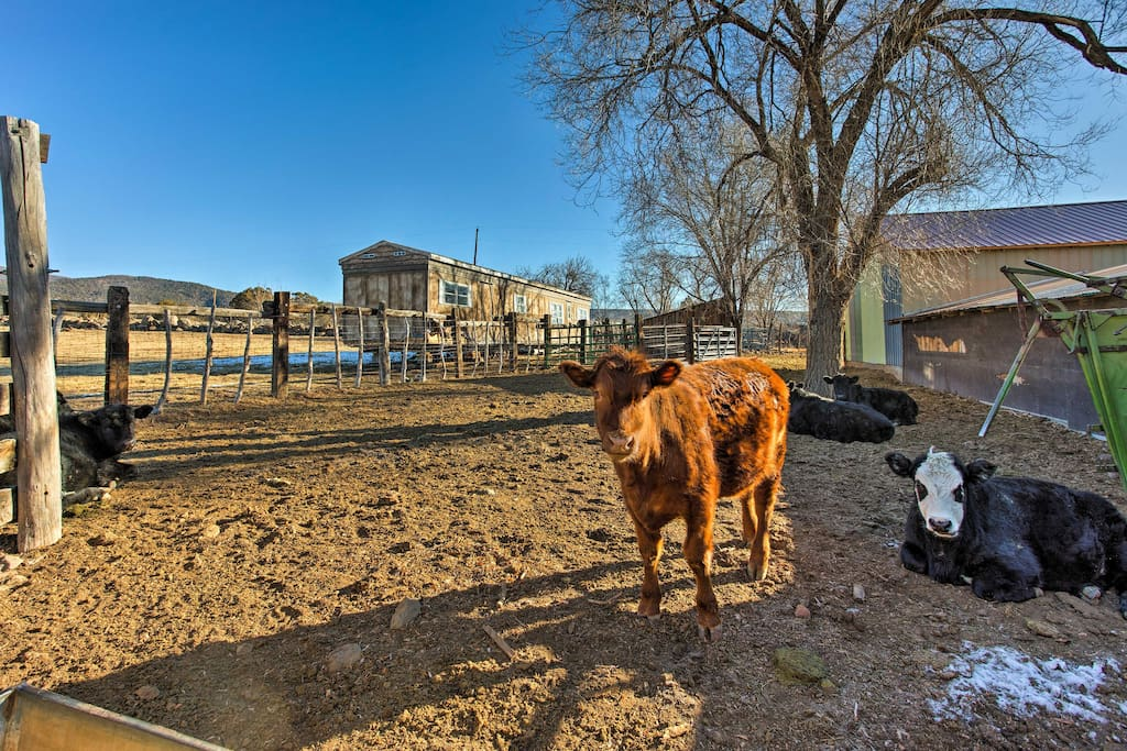 Whether you choose to spend your time petting the cows, playing basketball, or hiking in Grand Junction, you'll enjoy an unforgettable Colorado getaway!