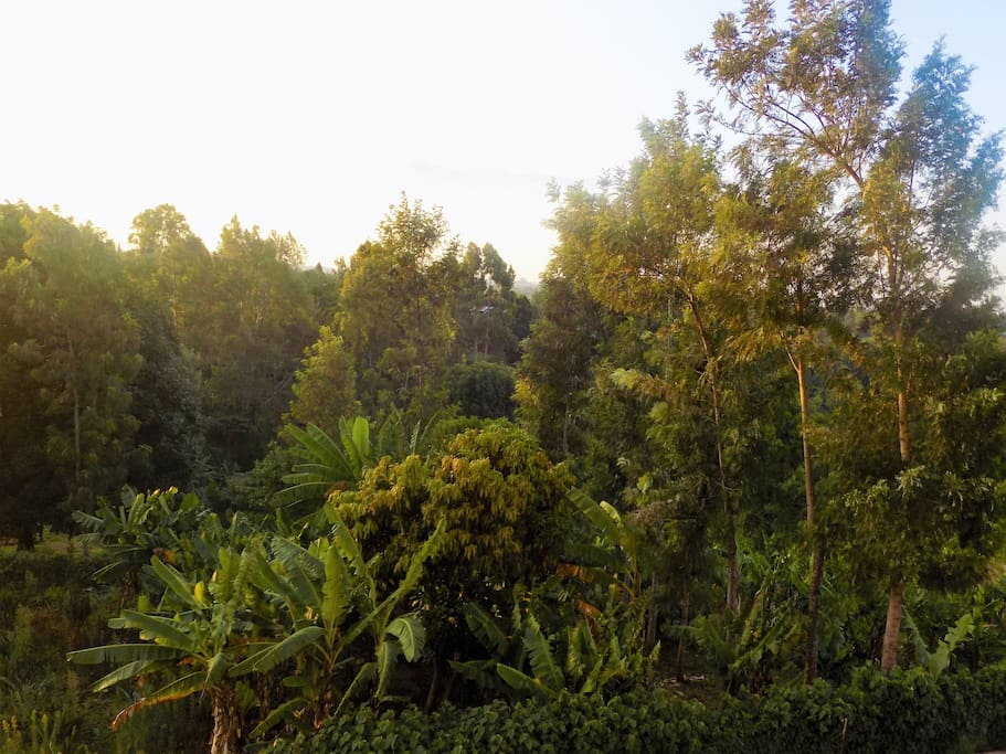 The view to Karura Forest
