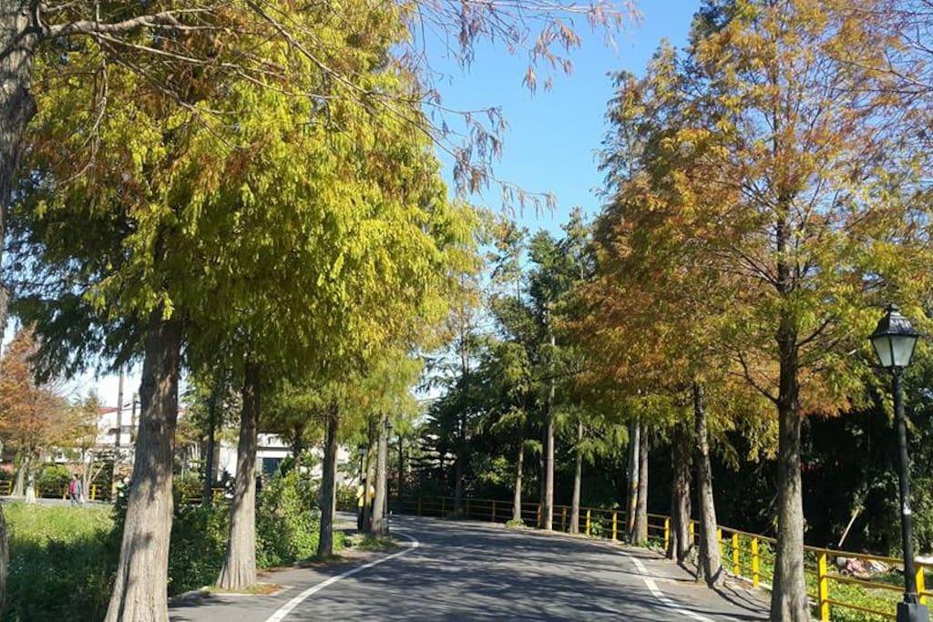 靠近全國知名的落羽松步道