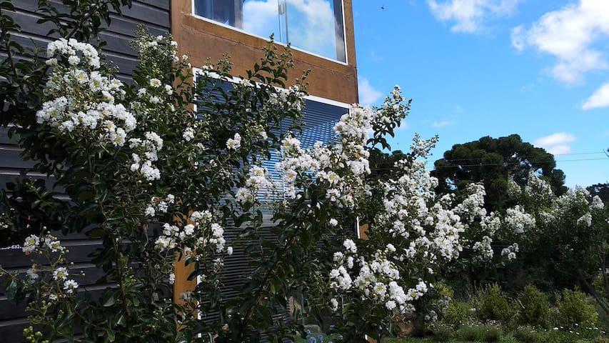 Resedás floridos no verão